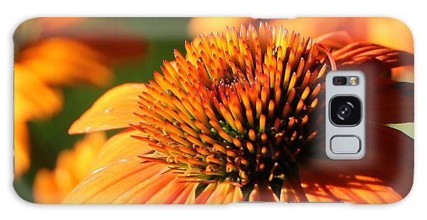 Orange Coneflower At First Light Galaxy Case