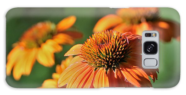 Orange Cone Flowers In Morning Light Galaxy Case