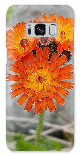 Orange Hawkweed Galaxy Case
