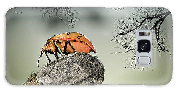 Orange Stink Bug 001 Galaxy Case by Kevin Chippindall