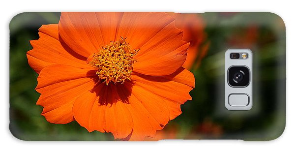 Orange Sulfur Cosmos Flower Galaxy Case