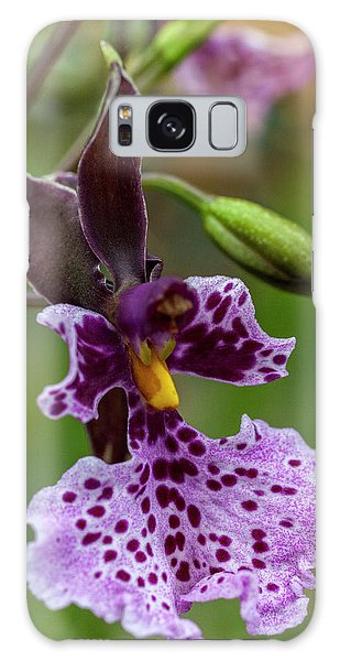 Galaxy Case featuring the photograph Orchid - Caucaea Rhodosticta by Heiko Koehrer-Wagner
