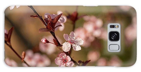 Purple Leaf Sandcherry Blossoms 2 Galaxy Case