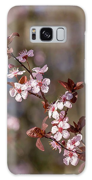 Purple Leaf Sandcherry Blossoms Galaxy Case