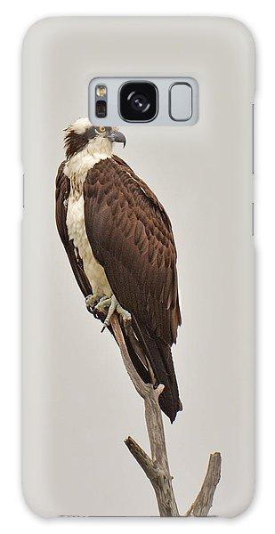 Osprey Galaxy Case by Alan Lenk