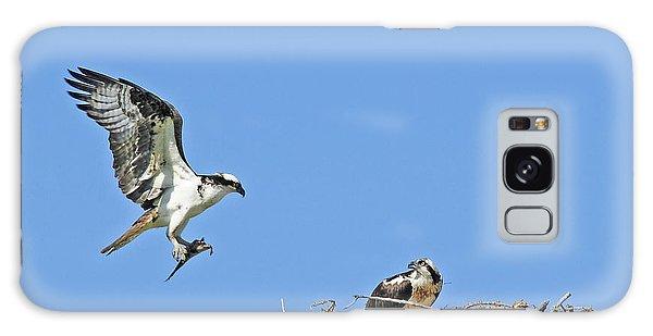 Osprey Brings Fish To Nest Galaxy Case