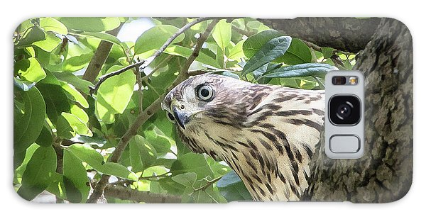 Red-shouldered Hawk Fledgling - 5 Galaxy Case