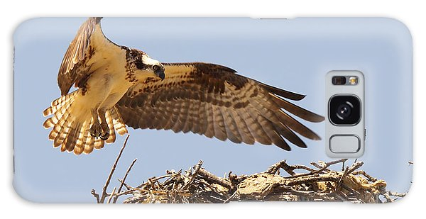 Osprey Hovering Above Nest Galaxy Case by Max Allen