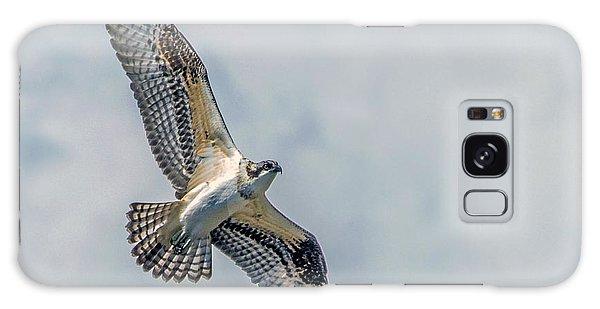 Osprey In Flight Galaxy Case