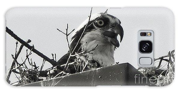 Osprey In Nest Galaxy Case
