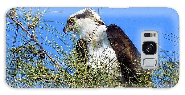 Osprey In Tree Galaxy Case