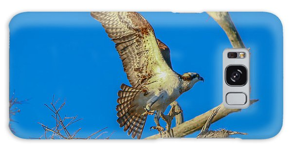 Osprey Landing On Branch Galaxy Case