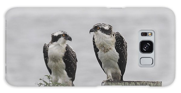 Osprey On Nj Shore 2014 Galaxy Case