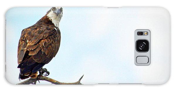 Galaxy Case featuring the photograph Osprey Out On A Limb by AJ Schibig