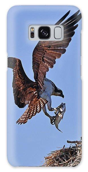 Osprey With Fresh Catch Galaxy Case