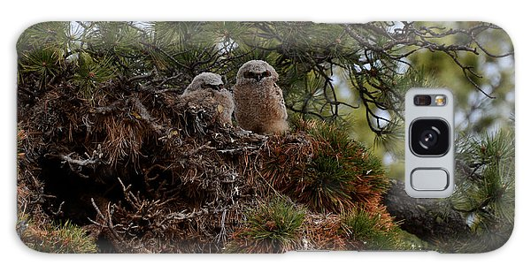 Owl Babies Rocky Mountain National Park  Galaxy Case