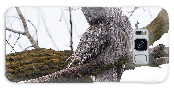 Owl Scowl Galaxy Case