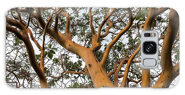 Pacific Madrone Trees Galaxy Case