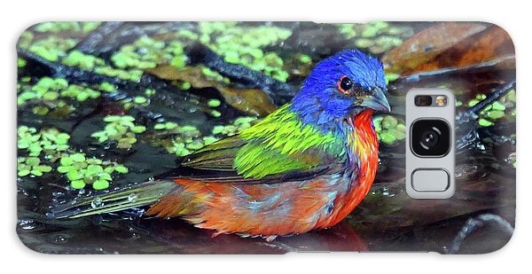 Painted Bunting After Bath Galaxy Case