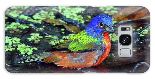 Painted Bunting After Bath Galaxy Case by Larry Nieland