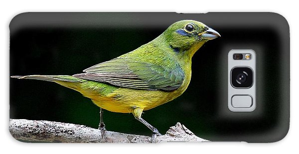 Painted Bunting - Second Year Male Galaxy Case