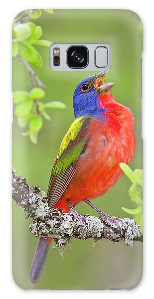 Painted Bunting Singing 2 Galaxy Case