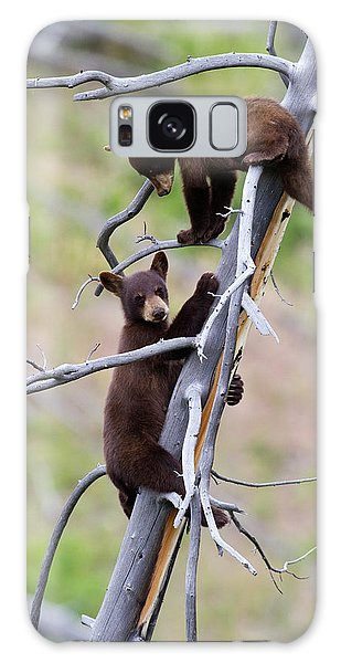 Pair Of Bear Cubs In A Tree Galaxy Case