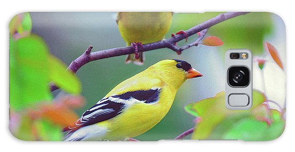 Pair Of Goldfinches Galaxy Case