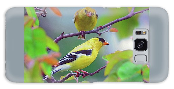 Pair Of Goldfinches Galaxy Case by Rodney Campbell