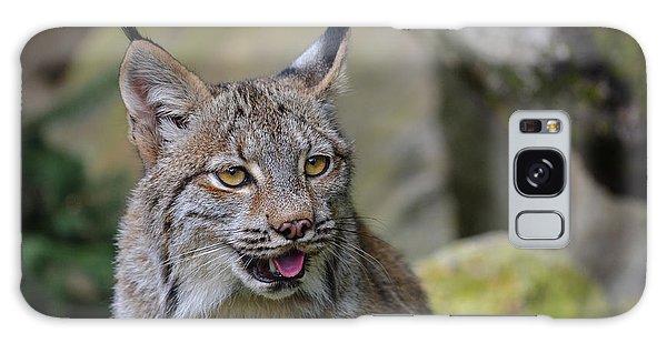 Panting Lynx Galaxy Case