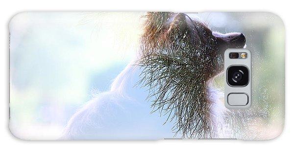 Papillon Pine Landscape Galaxy Case