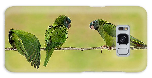 Parakeet Trio Galaxy Case