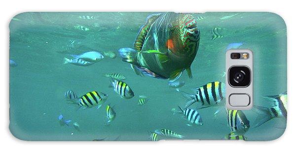 Parrot Fish Galaxy Case