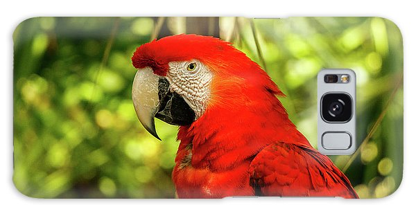Parrot Galaxy Case