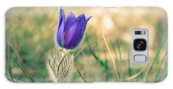 Pasque Flower Galaxy Case