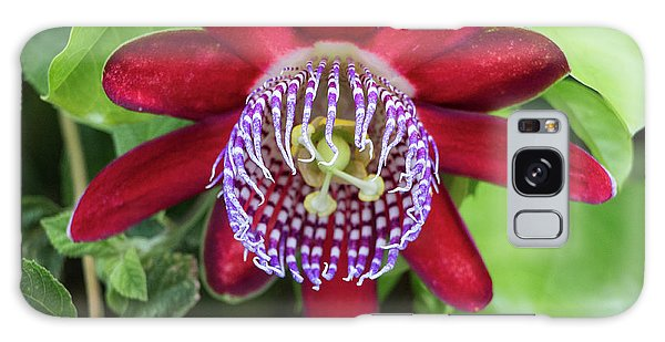 Passiflora Ruby Glow. Passion Flower Galaxy Case