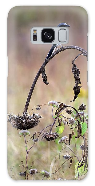 Pastoral Scene Bird On Sunflower Galaxy Case