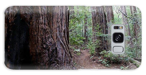 Pathway Through A Redwood Forest On Mt Tamalpais Galaxy Case