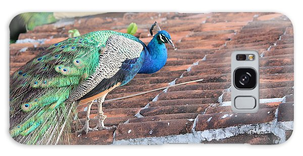 Peacock On Rooftop Galaxy Case