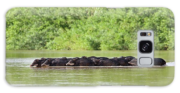 Peccaries Herd Crossing River Galaxy Case