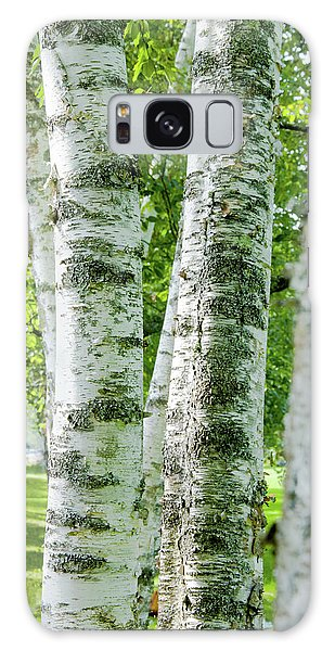 Peek A Boo Birch Galaxy Case by Greg Fortier