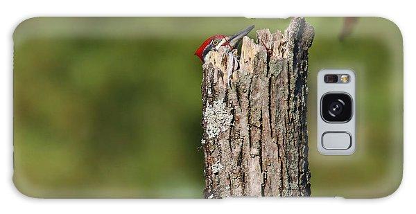 Peek A Boo Pileated Woodpecker Galaxy Case