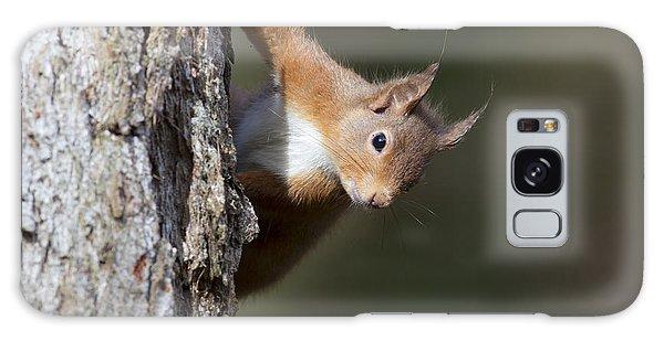 Peekaboo - Red Squirrel #29 Galaxy Case