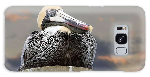 Pelican Perch Galaxy Case by Betty Denise