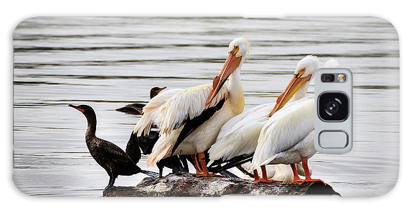 Pelicans And Cormorants Galaxy Case