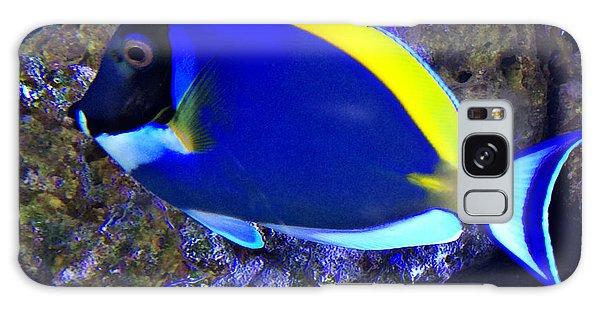 Blue Tang Fish  Galaxy Case