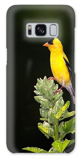 Perched American Goldfinch Galaxy Case