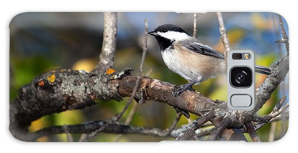 Perched Black-capped Chickadee Galaxy Case