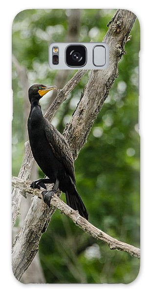 Galaxy Case featuring the photograph Perched Double-crested Cormorant by Steven Santamour