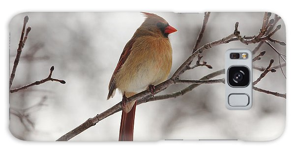 Perched Female Red Cardinal Galaxy Case